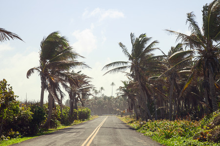 Palm trees on the Road photo