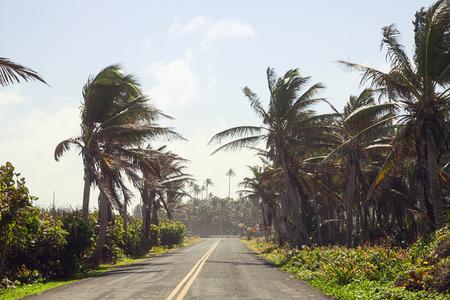 Palm trees on the Road Standard-Bild
