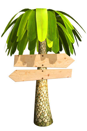 range fruit: Wooden signboard on a palm tree. Isolated on white