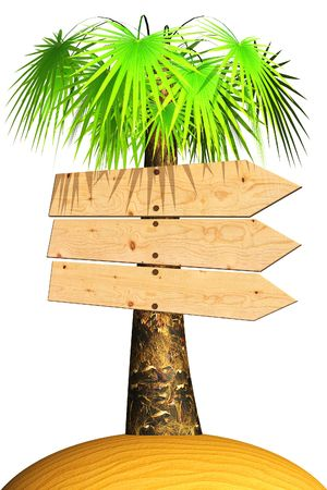 tether: Wooden signboard on a palm tree. Isolated on white