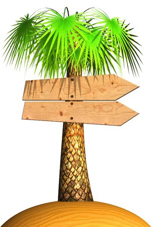 Wooden signboard on a palm tree. Isolated on white photo