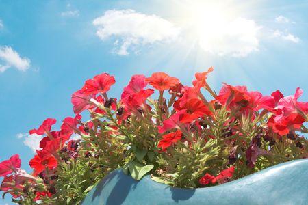 flowers Stock Photo - 6810930