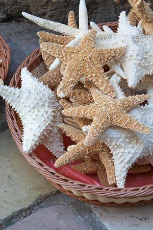 mollusc: Sea shells in a basket