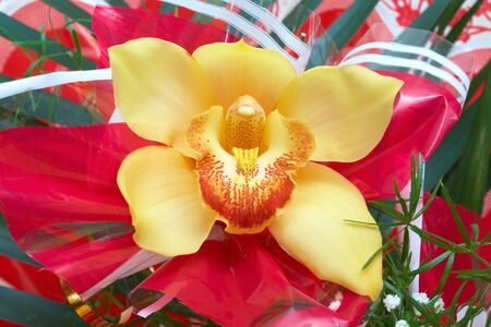 closeup of orchid flower Stock Photo - 6837105