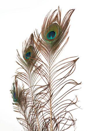 piuma di pavone: Una piuma di pavone isolata su uno sfondo bianco  Archivio Fotografico