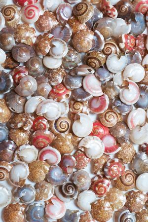 clam beds: Set of colorful seashells