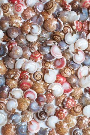 Set of colorful seashells Stock Photo - 6836987