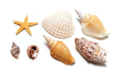 Set of sea shells photo