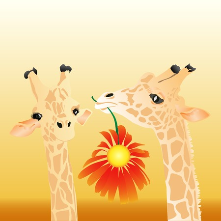 modesty: The male a giraffe gives to a female a flower