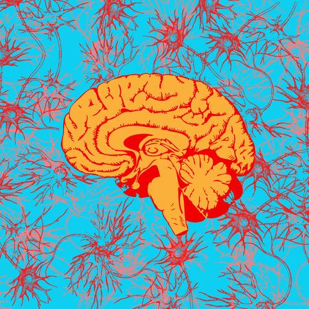 Cerebro humano penetrada por comunicaciones neuronales