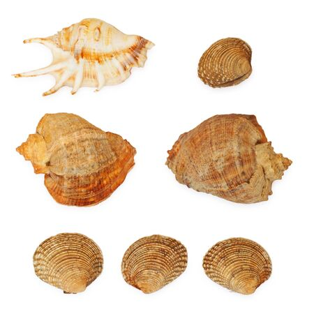 ocean seashells collection isolated on white background photo