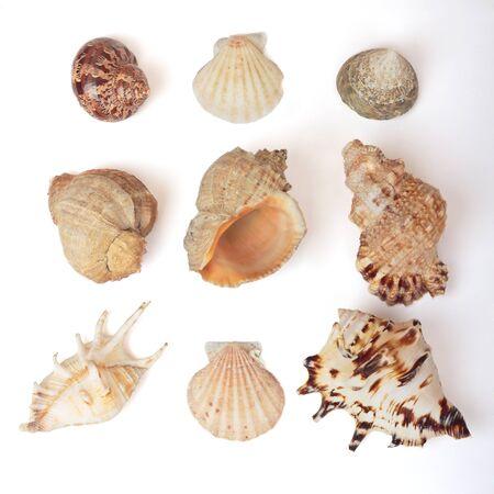 Set of sea shells. Isolated on white photo