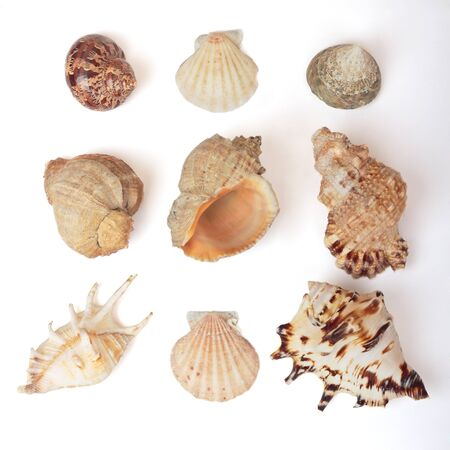 Set of sea shells. Isolated on white photo