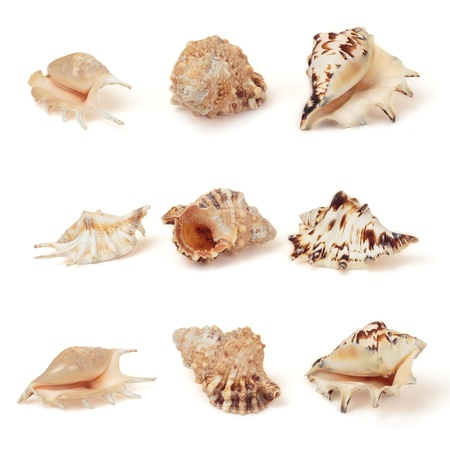 Set of sea shells. Isolated on white, with clipping path. photo