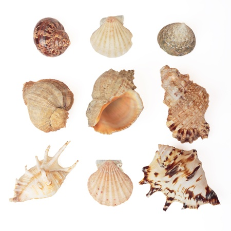 Set of sea shells. Isolated on white, with clipping path. 免版税图像