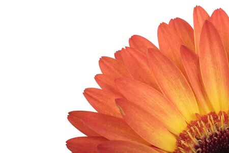 Macro photo of gerber flower  Hight res  All in focus  Isolated on white Stock Photo - 13428063