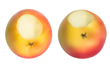 nibbled: Realistic apples set. Isolated on white. Vectore Illustration