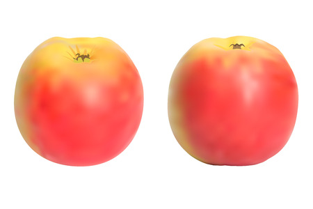 vectore: Realistic apples set. Isolated on white. Vectore Illustration