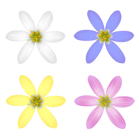 Set of Six Petal Flower. Vector illustration Vector