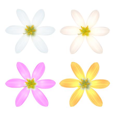 Set of Six Petal Flower. Vector illustration Vector