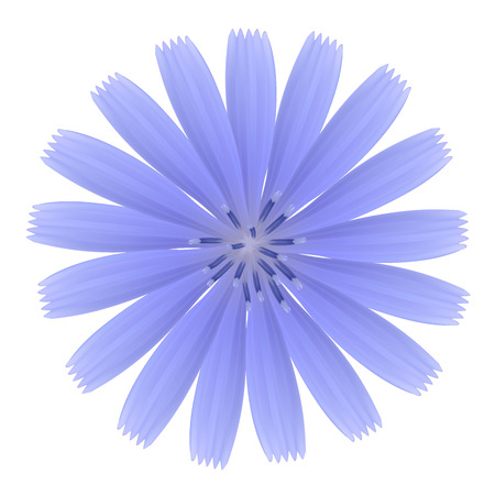 Blue flower. Photo-realistic vector. Vector
