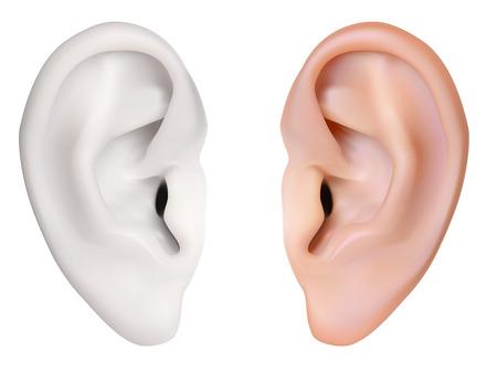 사실적인 벡터입니다. 인간의 귀입니다. 흰색에 고립