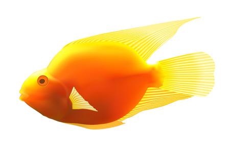 ichthyology: Yellow fish. Vector illustration Illustration