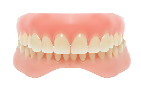 Human jaw. Vector illustration