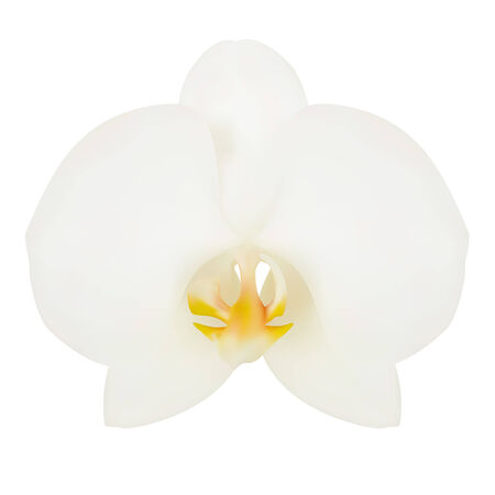 lila: White flower of Orchid. Vector illustration. Isolated white
