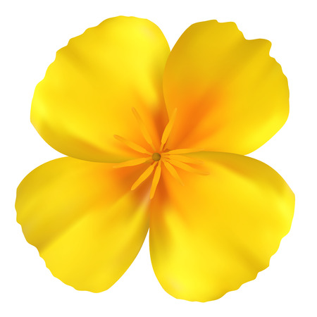 Beautiful yellow flower. Isolated on white. Vector illustration Stok Fotoğraf - 27349211