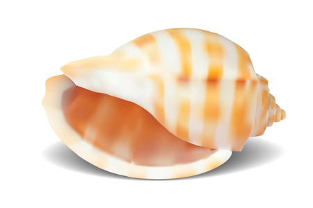 Seashell, isolated on white. Vector illustration Vector