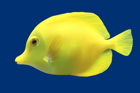 moorish idol: Yellow tropical fish. Vector illustration