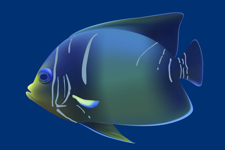 moorish idol: Blue tropical fish. Vector illustration Illustration