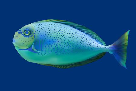 anemonefish: Blue tropical fish. Vector illustration Illustration