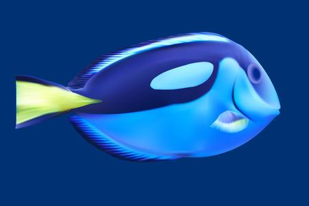 trigger fish: Blue tropical fish. Vector illustration Illustration