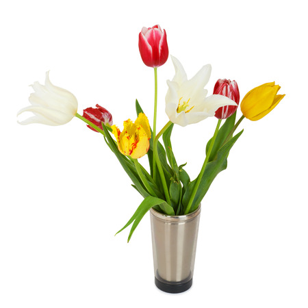 Beautiful tulips in bucket. Isolated on white photo
