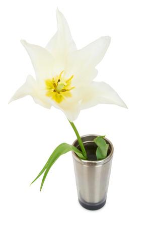 White tulip isolated on whit background  photo