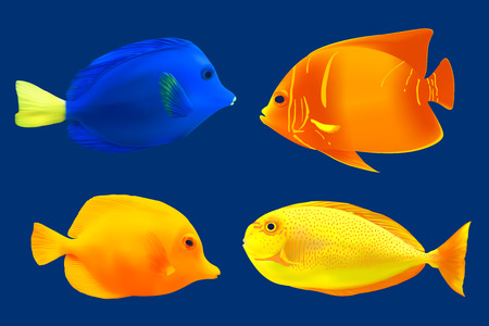 trigger fish: Set of tropical fish illustration