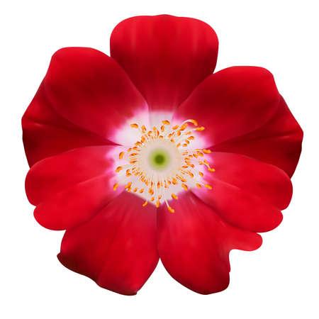 Bell flower illustration. Isolated on white Vector