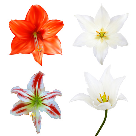 Set of flowers. Photo-realistic Vector illustration. Isolated on white Vector