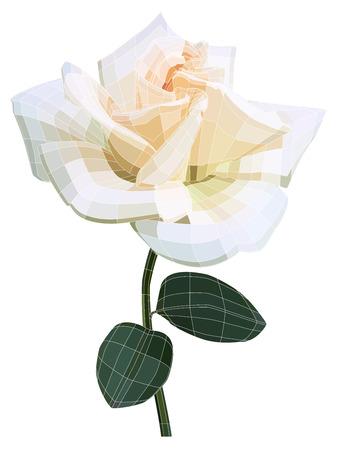 rose blanche: Blanc, rose, fleur illustration avec maille visible. Isol� sur blanc Illustration