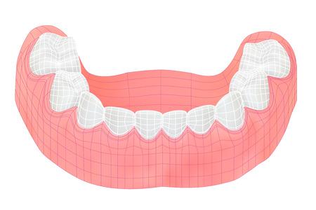 lower teeth: Teeth of the lower jaw.
