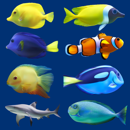 peces de acuario: Conjunto de peces tropicales ilustración