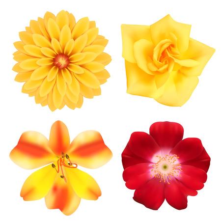 georgina: Set of flowers Illustration