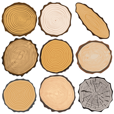 Wood texture and elements isolated. Vector illustration Vector