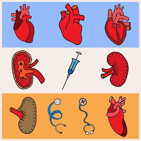 set flat human organs icons illustration concept. Vector background design Vector