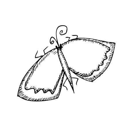 nature one painted: Butterfly sketch. Vector illustration. Isolatrd on white