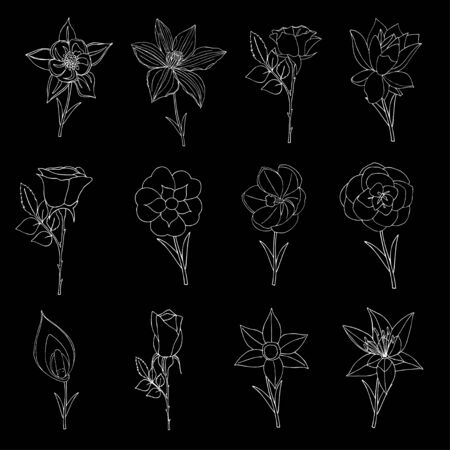 Doodles Flowers collection. Vector illustration, Isolated Vector