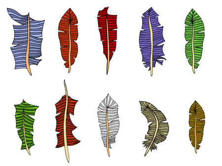 a literary sketch: Feather Set. Vector illustration. Isolated on white Illustration