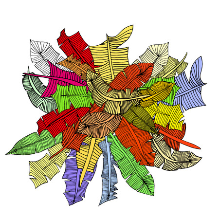 Feather Set. Vector illustration. Isolated on white Illustration